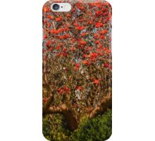 Coral tree ablaze with blooms iPhone Case/Skin