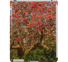 Coral tree ablaze with blooms iPad Case/Skin