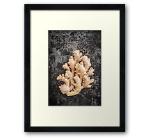 Fresh ginger Framed Print
