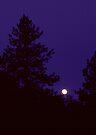 Full Moon Rising by Allen Lucas