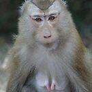 Monkey Business by tracyleephoto