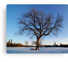 Afternoon Tree and Bench Canvas Print