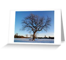 Afternoon Tree and Bench Greeting Card