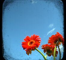 red gerberas by Phoenix-Appeal