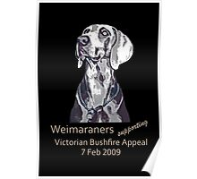 Weimaraners Supporting Bushfire Appeal. Poster