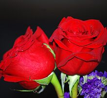 Red Roses 2 by saseoche