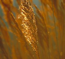 Grass Highlights by Adam Bykowski