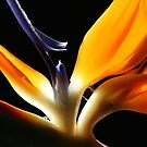 """Bird Of Paradise"" by Michael Jeffries"