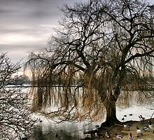 the tree by cynthiab