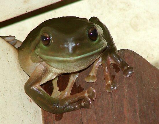 Kermit by frootjoose