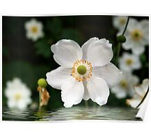 flower reflection Poster