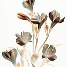 Burnt Alstroemeria by Marsha Tudor