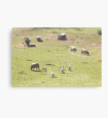 Looking for mum Canvas Print