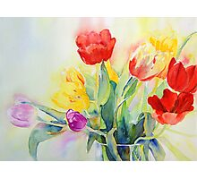 Tulip Rainbow #2 Photographic Print