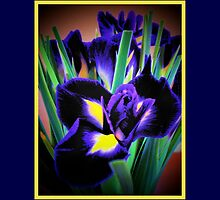 A Different View of Irises by Eleanor Wylie