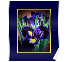 A Different View of Irises Poster