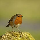 The Robin by laurav