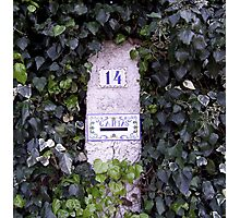 """ Post box in the ivy."" Photographic Print"