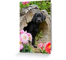 Lab puppy playing hide and seek Greeting Card