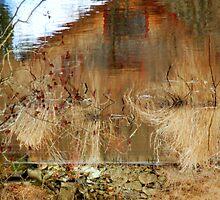 Perception... by LindaR