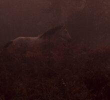 Horse by Kasia Nowak