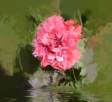 abstract of frilly poppy flooded by hilarydougill