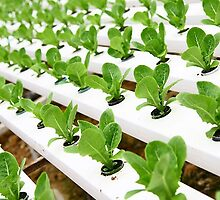 The benefit of having Hydroponics Pinellas by nickgm1538
