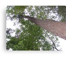 Houston Canopy Metal Print