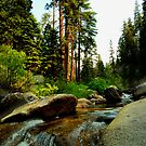 Upstream in Sequoia by HeavenOnEarth