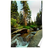 Upstream in Sequoia Poster