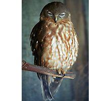Barking Owl Photographic Print