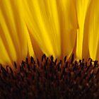 sunflower by Arissa