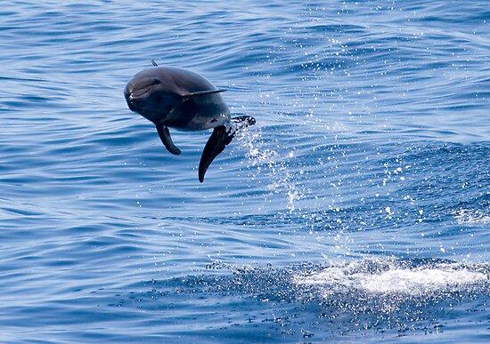 Dolphin Jump by Steve Bulford