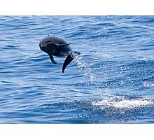 Dolphin Jump Photographic Print