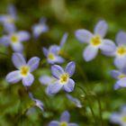 Tiny Tennessee Wildflowers by Tony  Bazidlo