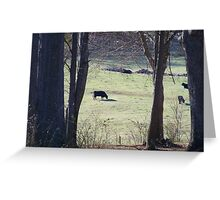 Cows in a pasture.. Greeting Card
