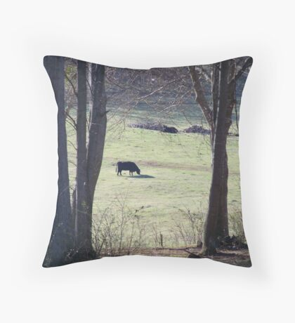 Cows in a pasture.. Throw Pillow