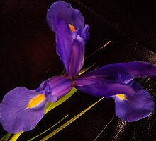 Pretty In Purple by DottieDees