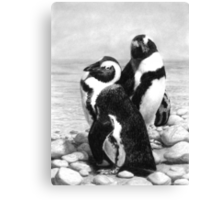 A Pair of Penguins - African Penguins Canvas Print