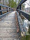 Remnants of Autumn by FrankieCat