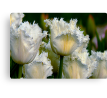 SIMPLY WHITE  PARROT TULIPS Canvas Print