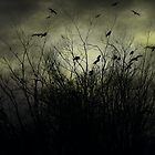 The Birds. by mariarty