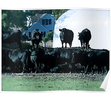 Black Angus Afternoon Gathering © 2008 Poster