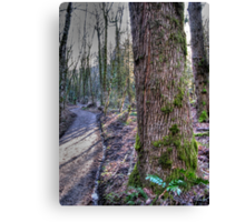 the trail Canvas Print