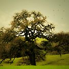 Sacred Roots Run Deep  by Anne  McGinn