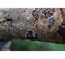 Ants Might Photographic Print