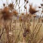 Weeds by for the love photography