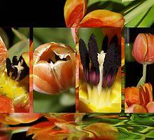 A Marraige Of Petals by StarKatz