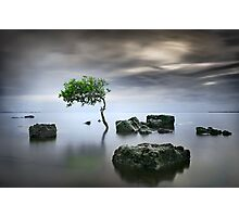 Zen Tree Photographic Print