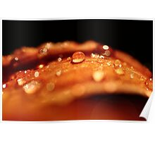 Water Droplets Poster